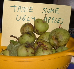 Ugly Fruit Could Lead to a Prettier World